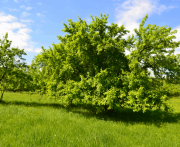 Яблоневый сад ресторан юрьев польский